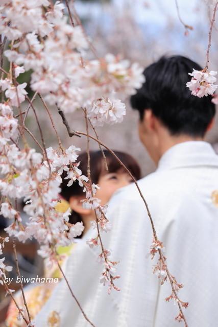 京都桜めぐり 知恩院~高台寺へ_b0055171_23475796.jpg