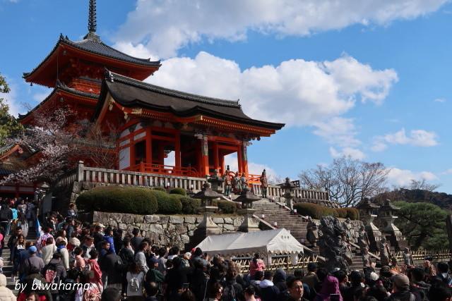 京都桜めぐり 知恩院~高台寺へ_b0055171_23484325.jpg