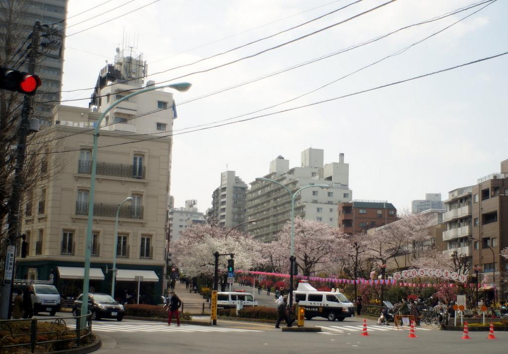 文京さくら祭り@播磨さくら坂 3/31_c0180686_08254955.jpg