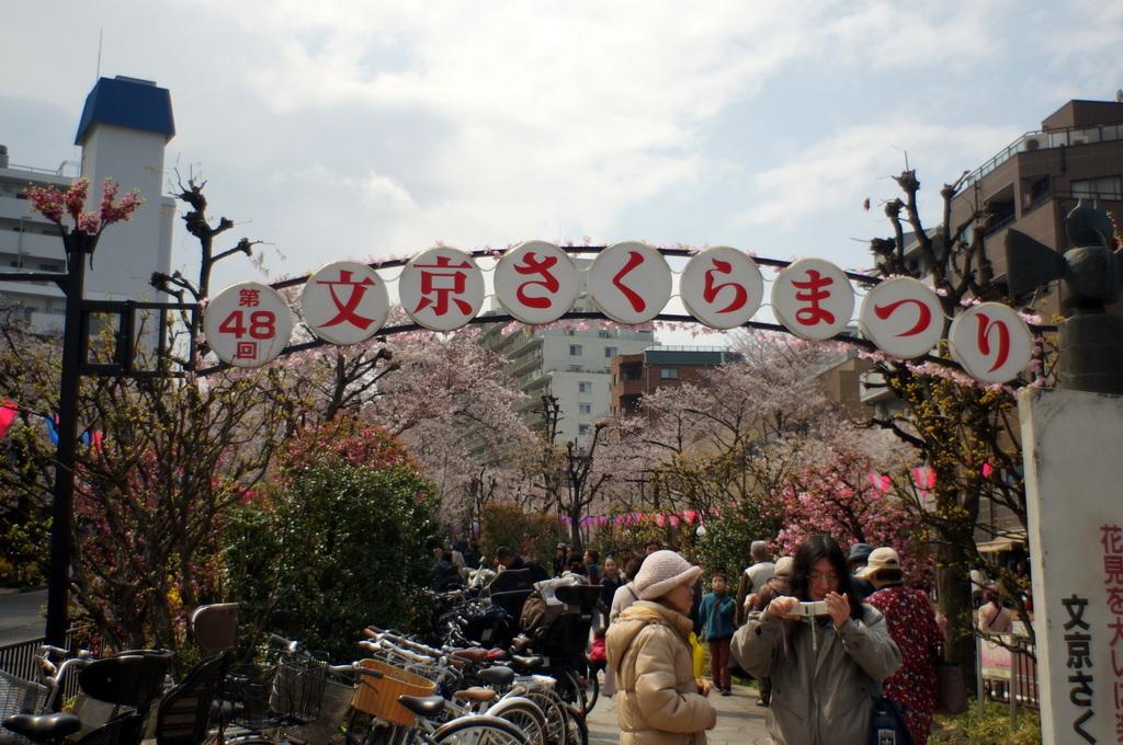 文京さくら祭り@播磨さくら坂 3/31_c0180686_08264595.jpg