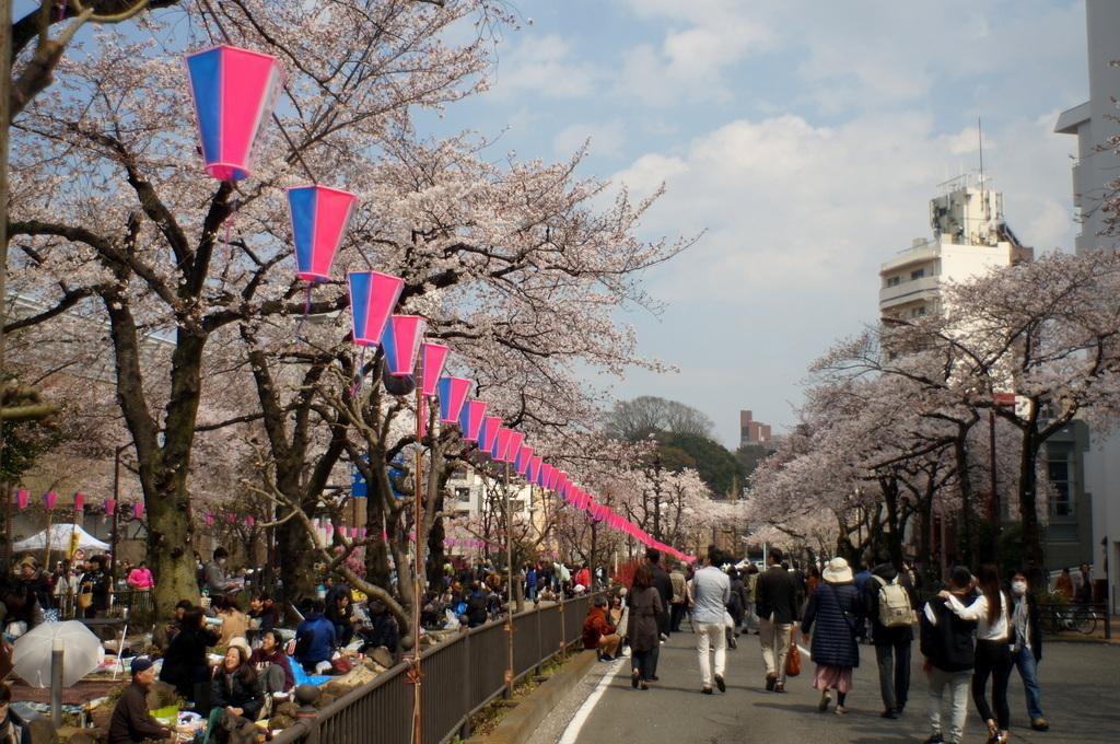 文京さくら祭り@播磨さくら坂 3/31_c0180686_08265512.jpg