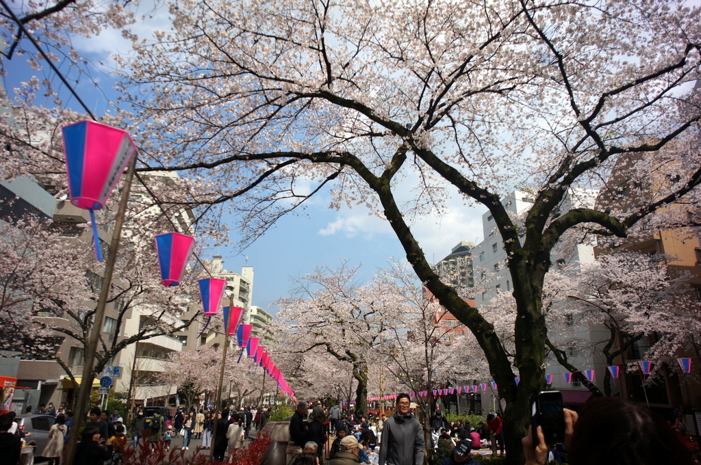 文京さくら祭り@播磨さくら坂 3/31_c0180686_08271213.jpg