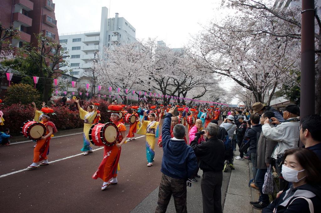 文京さくら祭り@播磨さくら坂 3/31_c0180686_08273314.jpg