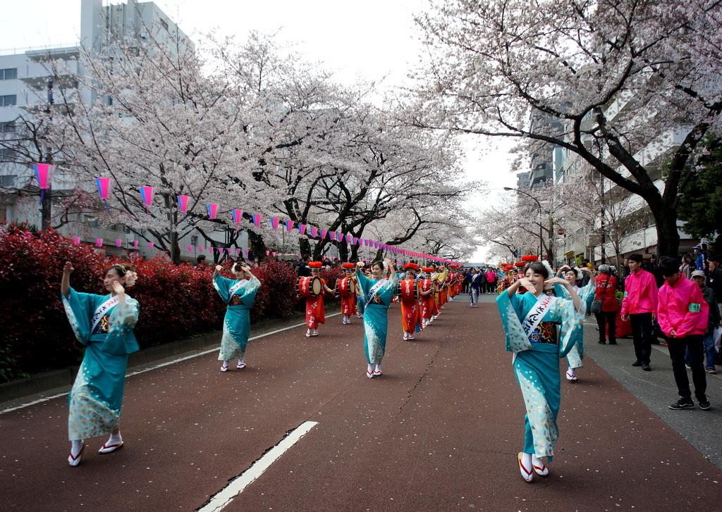 文京さくら祭り@播磨さくら坂 3/31_c0180686_08275505.jpg