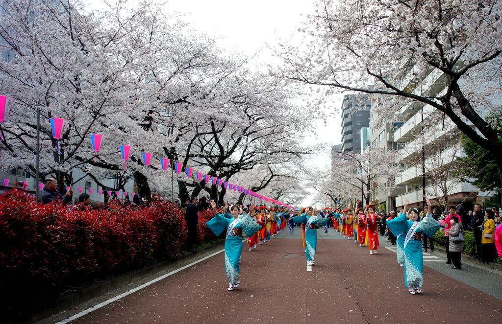 文京さくら祭り@播磨さくら坂 3/31_c0180686_08283826.jpg