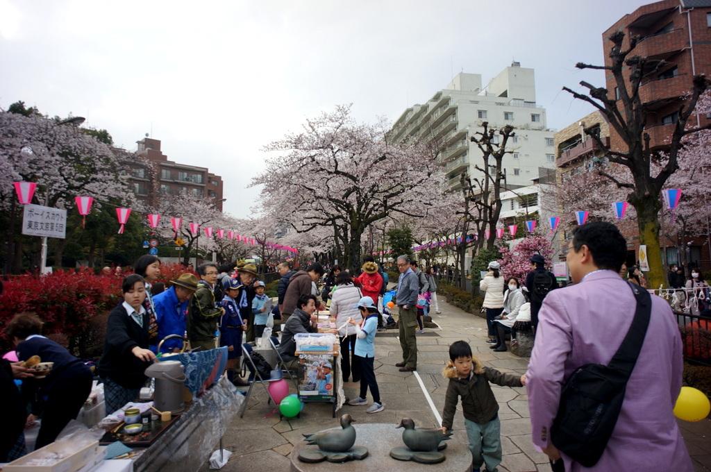 文京さくら祭り@播磨さくら坂 3/31_c0180686_08285500.jpg