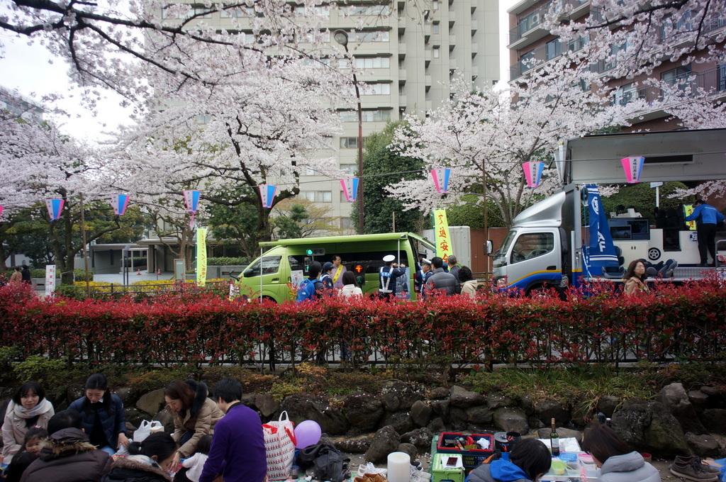 文京さくら祭り@播磨さくら坂 3/31_c0180686_08290310.jpg