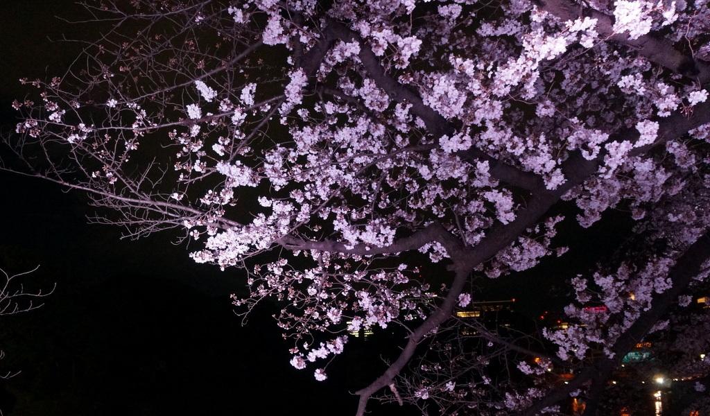 靖国神社から料亭千鳥へ 3/31_c0180686_11351940.jpg