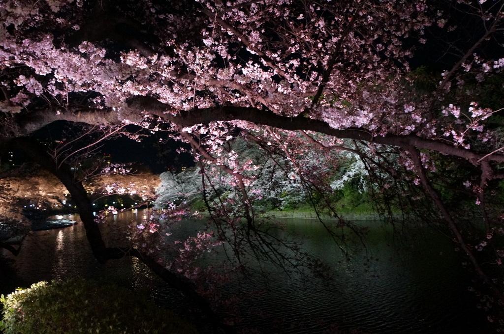 靖国神社から料亭千鳥へ 3/31_c0180686_11352572.jpg
