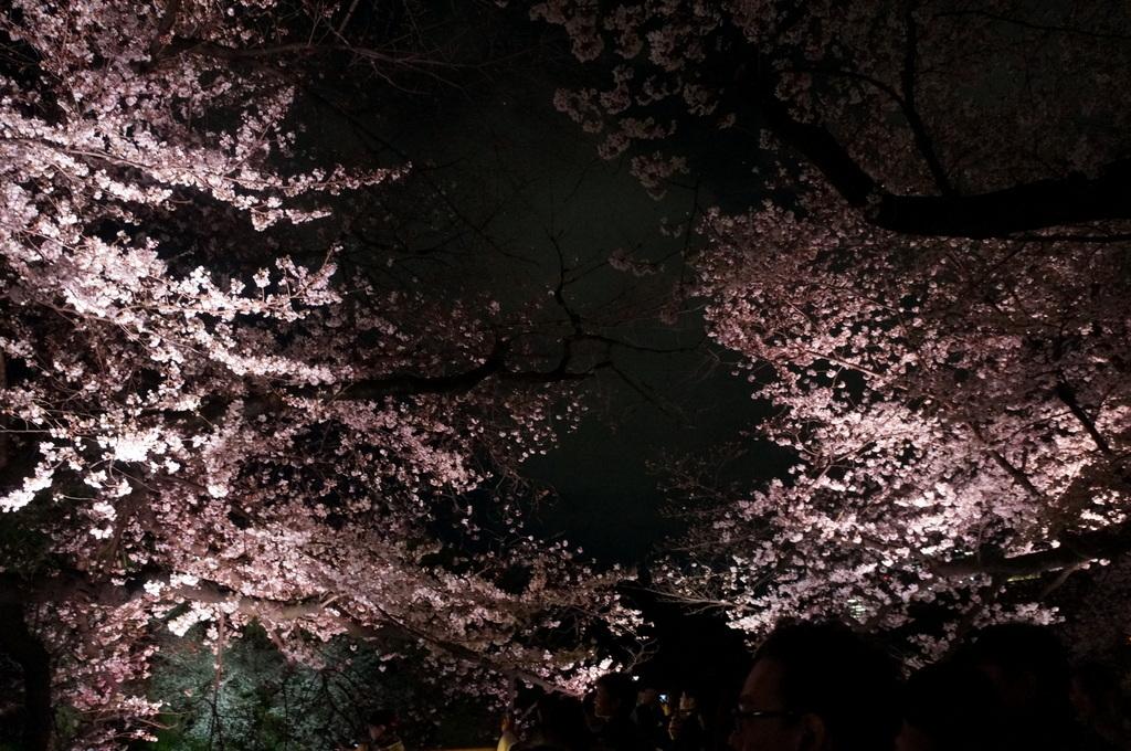 靖国神社から料亭千鳥へ 3/31_c0180686_11353028.jpg