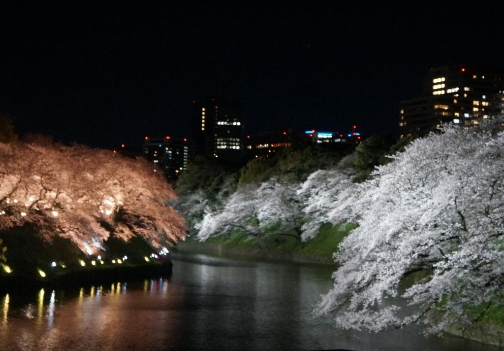 靖国神社から料亭千鳥へ 3/31_c0180686_11353867.jpg