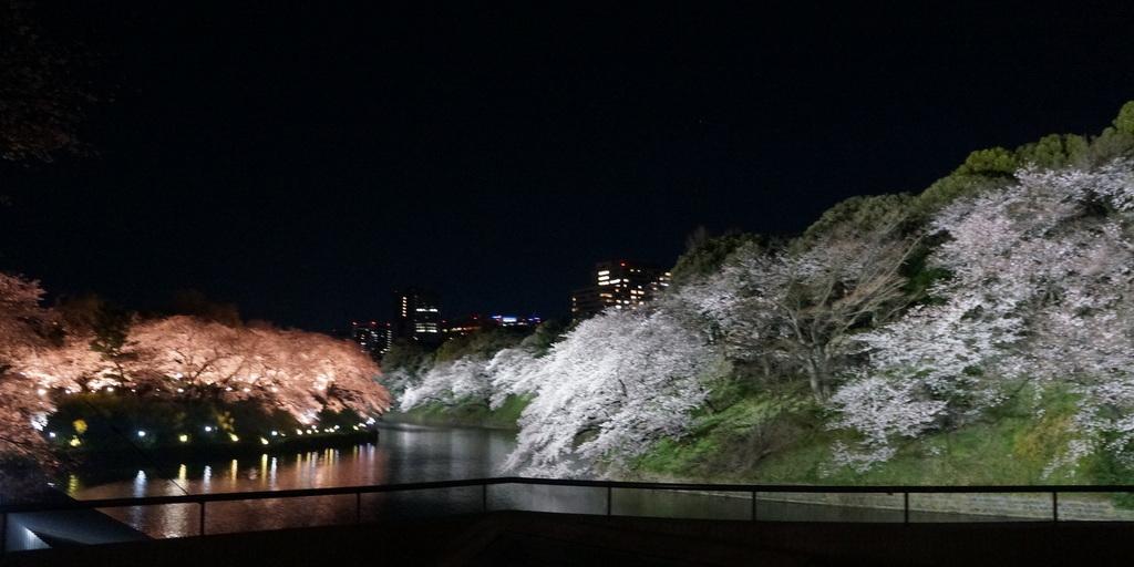 靖国神社から料亭千鳥へ 3/31_c0180686_11354525.jpg