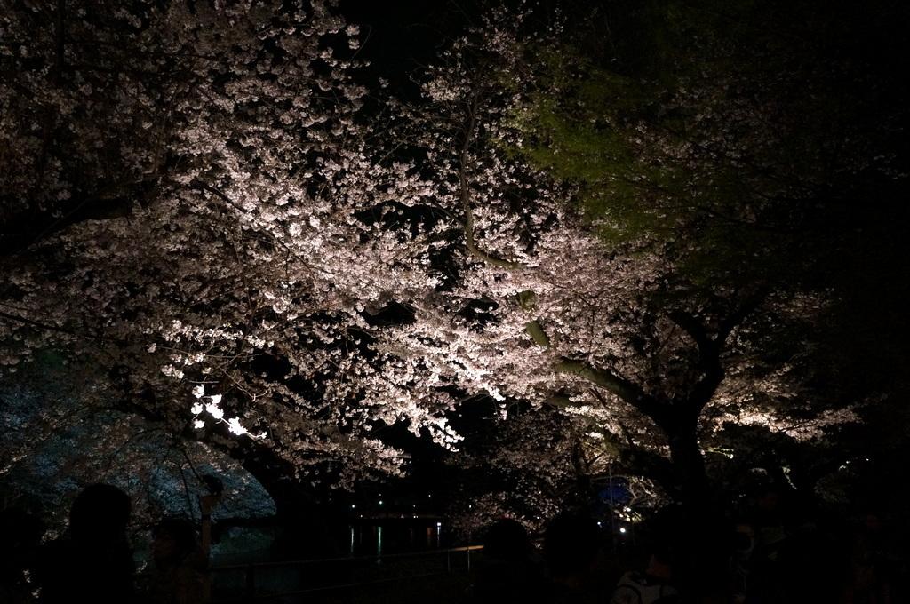 靖国神社から料亭千鳥へ 3/31_c0180686_11355191.jpg