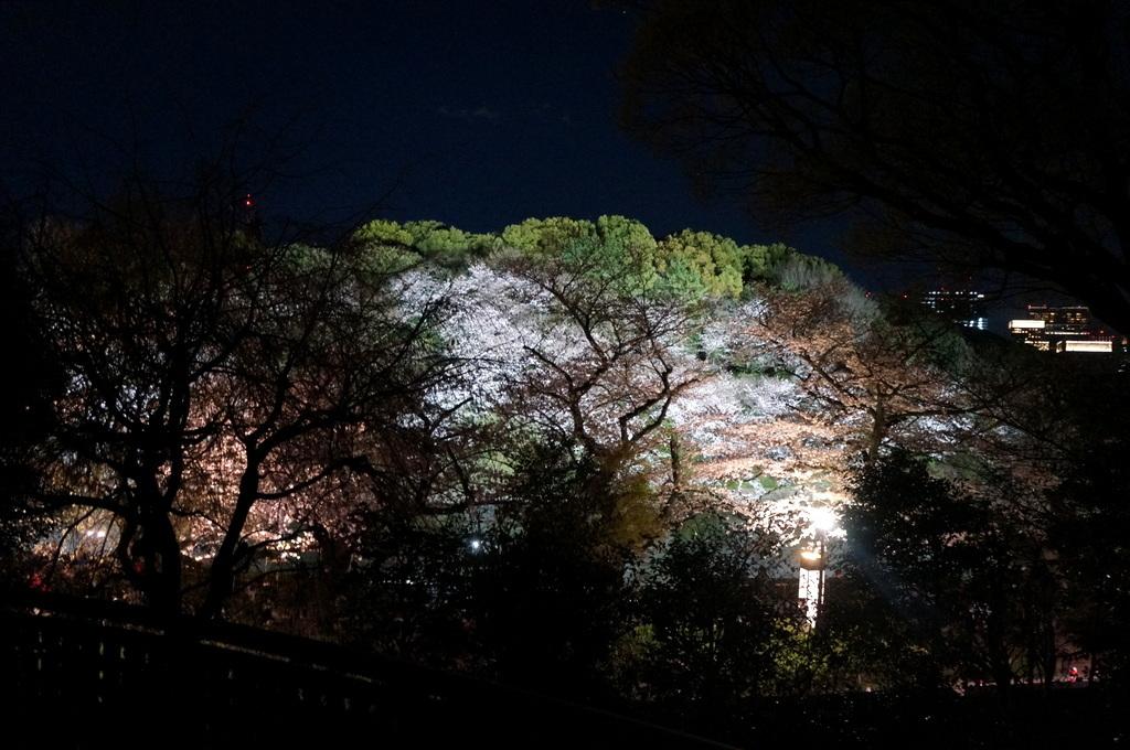 靖国神社から料亭千鳥へ 3/31_c0180686_11363361.jpg