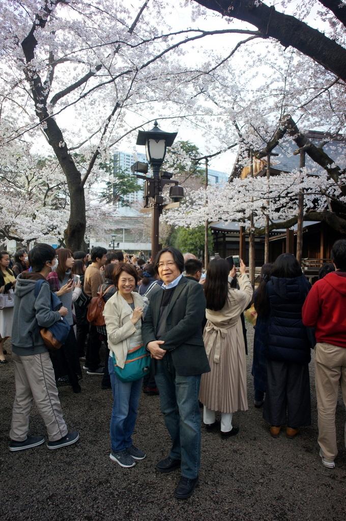 上野の櫻、さんさき坂カフェ、そして外堀土手から靖国神社_c0180686_11405254.jpg