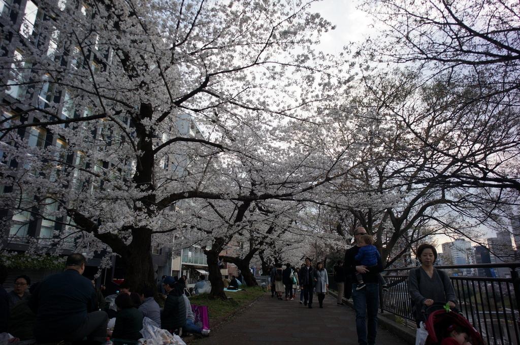 上野の櫻、さんさき坂カフェ、そして外堀土手から靖国神社_c0180686_11410008.jpg