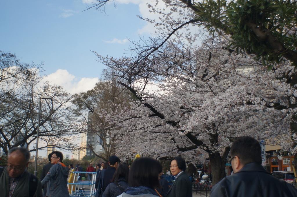 上野の櫻、さんさき坂カフェ、そして外堀土手から靖国神社_c0180686_11410993.jpg