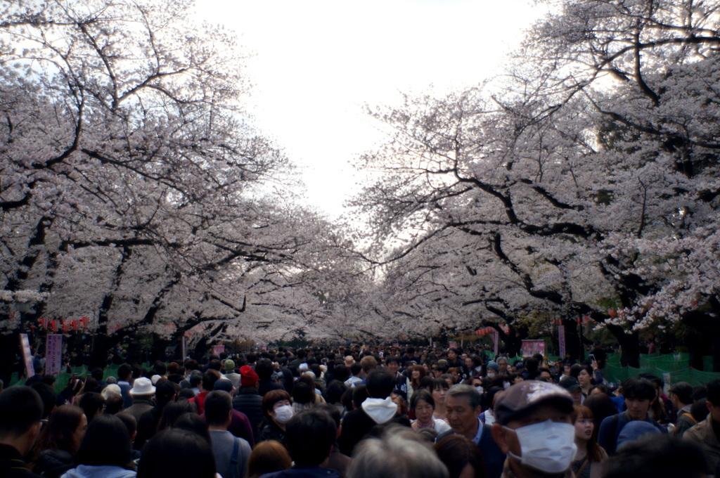 上野の櫻、さんさき坂カフェ、そして外堀土手から靖国神社_c0180686_11413438.jpg