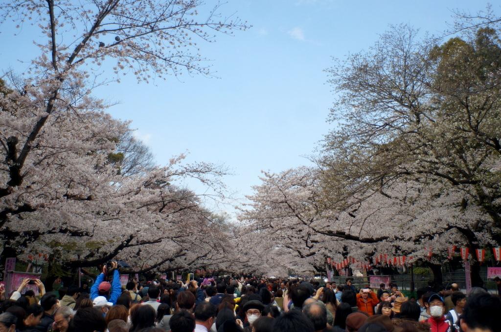 上野の櫻、さんさき坂カフェ、そして外堀土手から靖国神社_c0180686_11415137.jpg