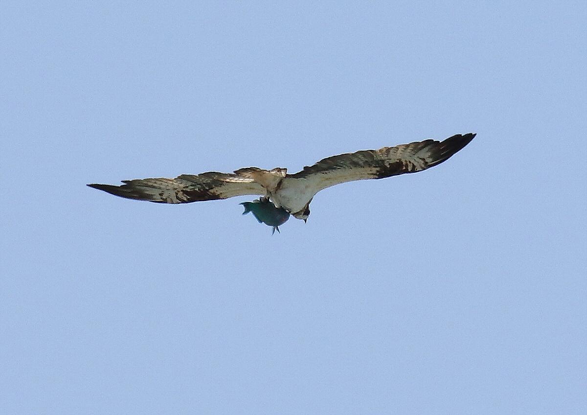 宮古島の野鳥-9_c0113597_10434387.jpg