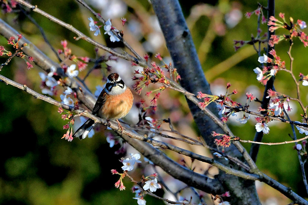 春早朝の五目撮りです_b0024798_11173447.jpg