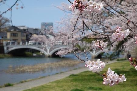 金沢の桜 2019.04.11_c0213599_21341183.jpg