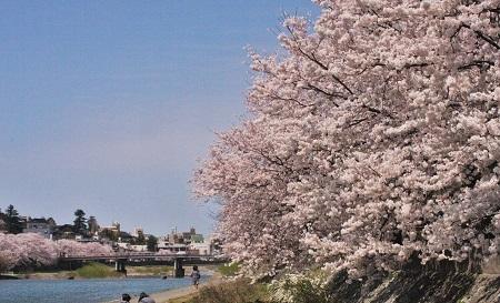 金沢の桜 2019.04.11_c0213599_21431936.jpg