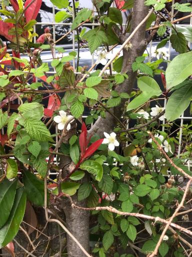 花の季節_f0101201_13455331.jpg
