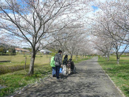 4/11 天啓公園_a0154110_08144290.jpg
