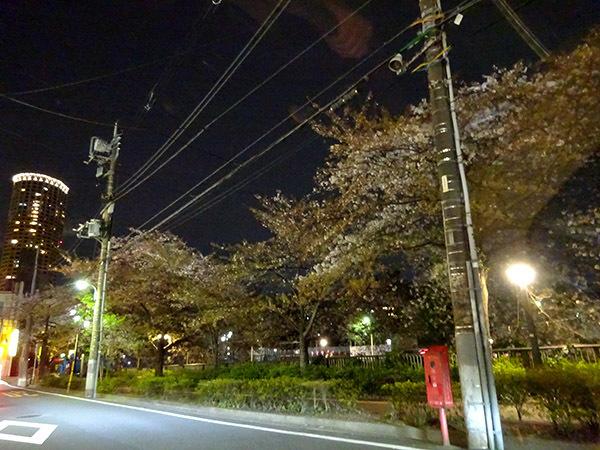 今週の弁当と、散りゆく目黒川の桜_f0097523_15074605.jpg