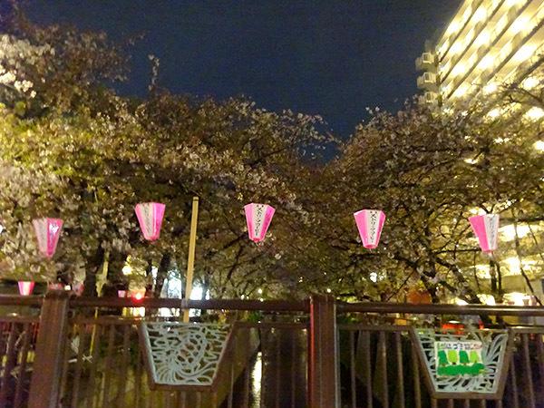 今週の弁当と、散りゆく目黒川の桜_f0097523_15080258.jpg