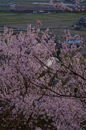 4月6日 夜明けから桜を追いかけて_f0037227_20423070.jpg