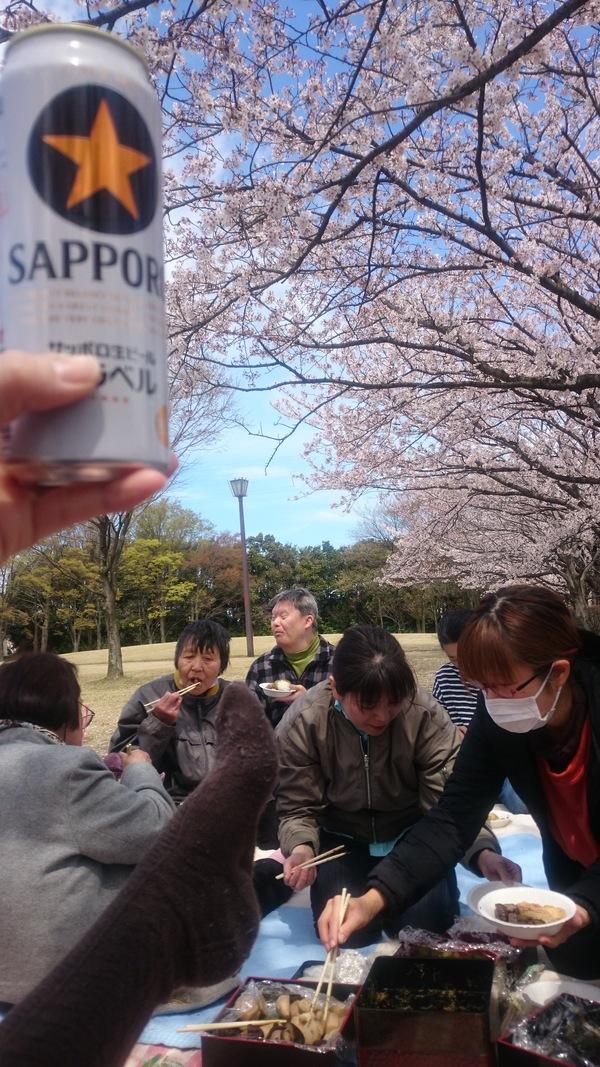 桜も見納め_d0180229_15292314.jpg