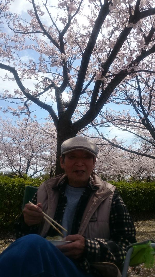 桜も見納め_d0180229_15353165.jpg