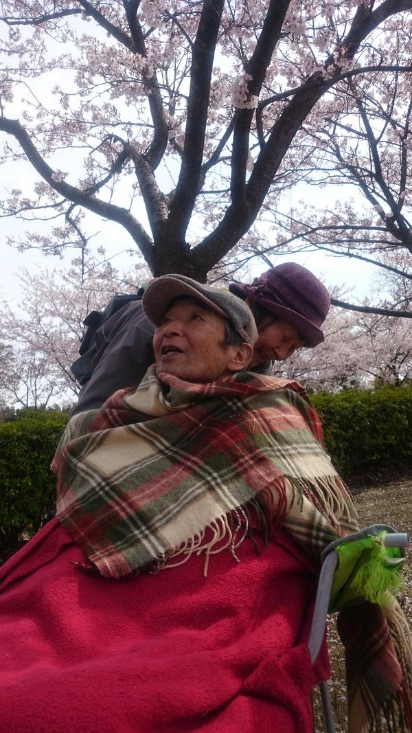 桜も見納め_d0180229_15363534.jpg