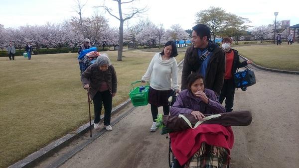 桜も見納め_d0180229_1551497.jpg