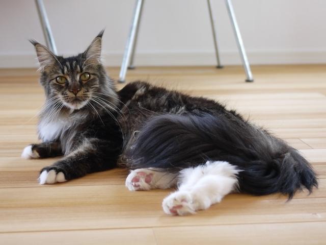 猫のお留守番 紙音ちゃん編。_a0143140_21252589.jpg