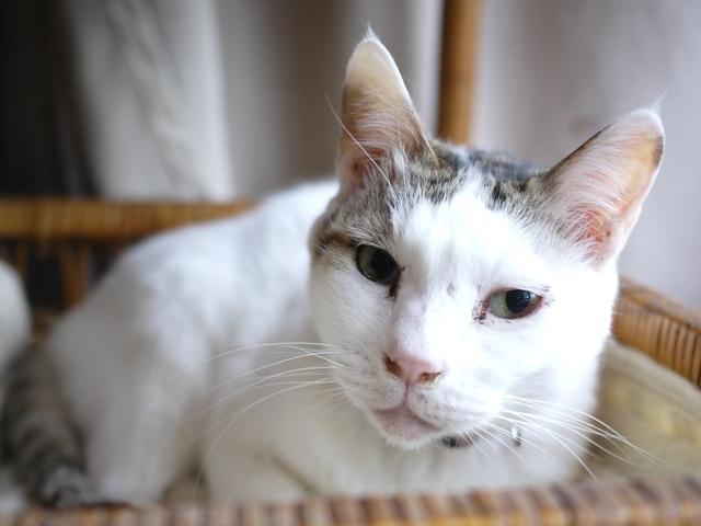 猫のお留守番 ガブくん編。_a0143140_21521207.jpg