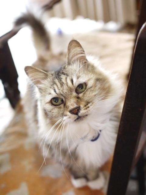 猫のお留守番 ライオンちゃん編。_a0143140_21542797.jpg