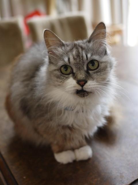 猫のお留守番 ダイヤちゃん編。_a0143140_22001143.jpg