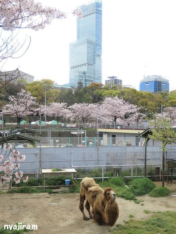 桜_f0002743_1957146.jpg
