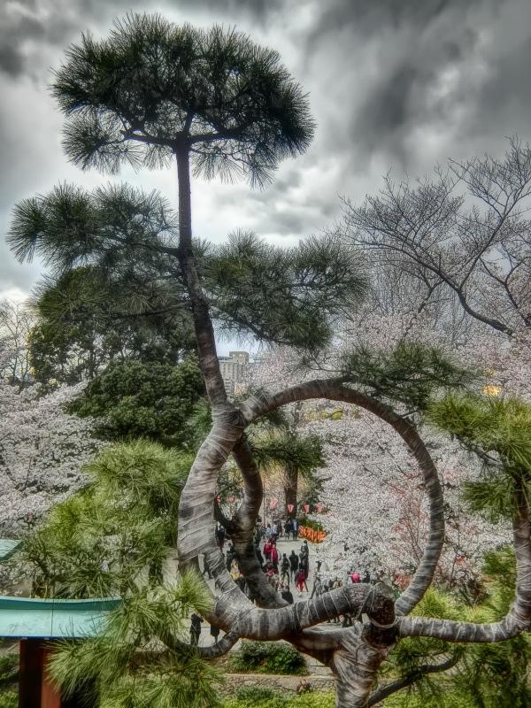上野(3)上野公園 清水観音堂_b0408745_21132436.jpg