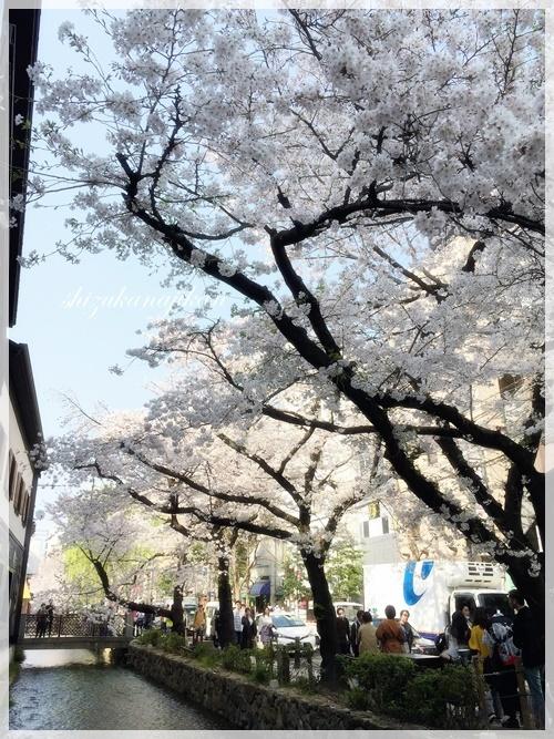 桜・さくら・サクラ・・・_a0341548_22461645.jpg