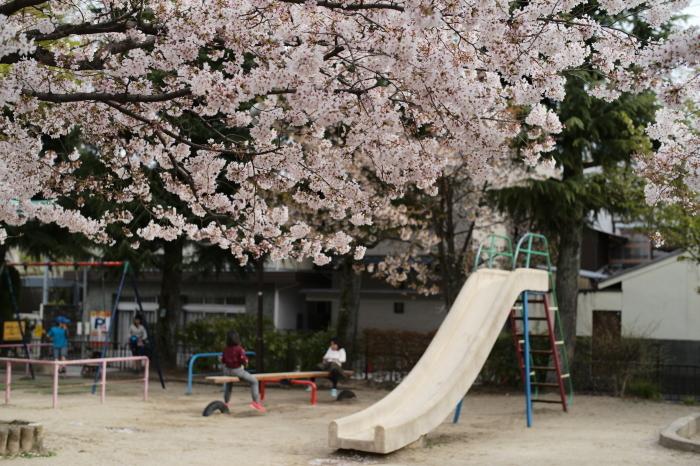 名残の桜とズミルックス。_e0172351_03140023.jpg