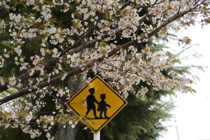 名残の桜とズミルックス。_e0172351_03142637.jpg
