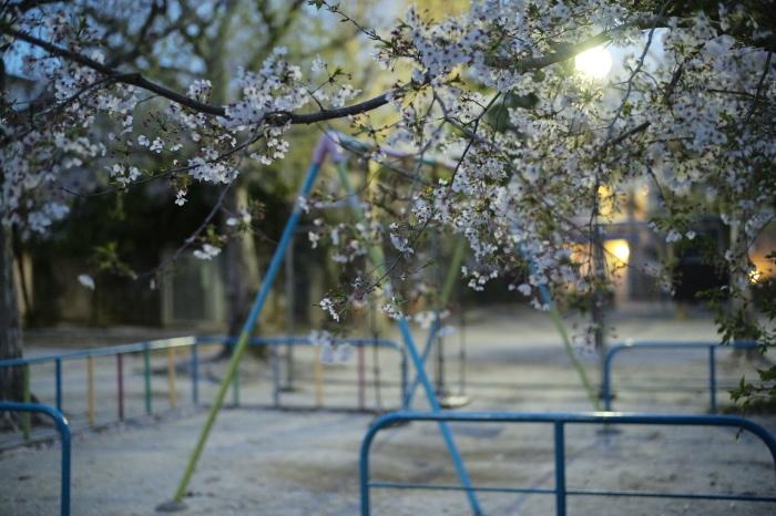 名残の桜とズミルックス。_e0172351_03145013.jpg