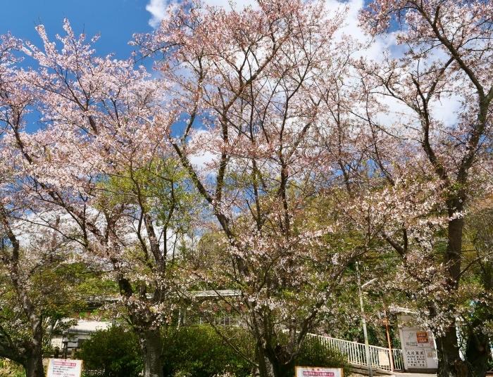 三年ぶりの大池遊園  2019-04-14 00:00   _b0093754_23111495.jpg