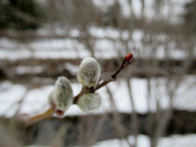 いちごと桜のケーキ * 春爛漫の大阪から一転、冬景色の軽井沢へ♪_f0236260_15121843.jpg