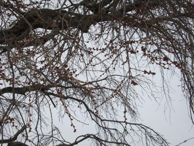 いちごと桜のケーキ * 春爛漫の大阪から一転、冬景色の軽井沢へ♪_f0236260_15123358.jpg