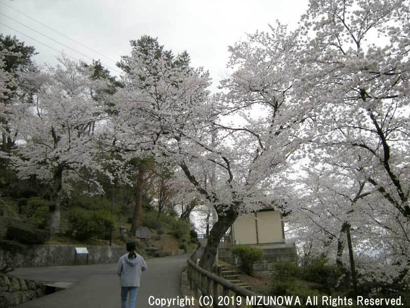 しだれ桜まつり_d0255366_13331696.jpg
